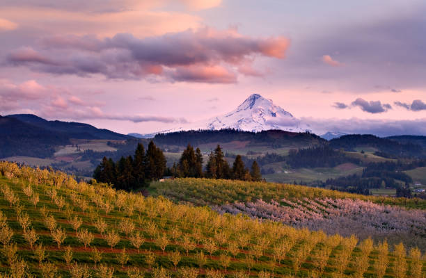Hood River View Sunset Sunset overlooking rolling hills of orchards in Hood River View  hood river valley stock pictures, royalty-free photos & images