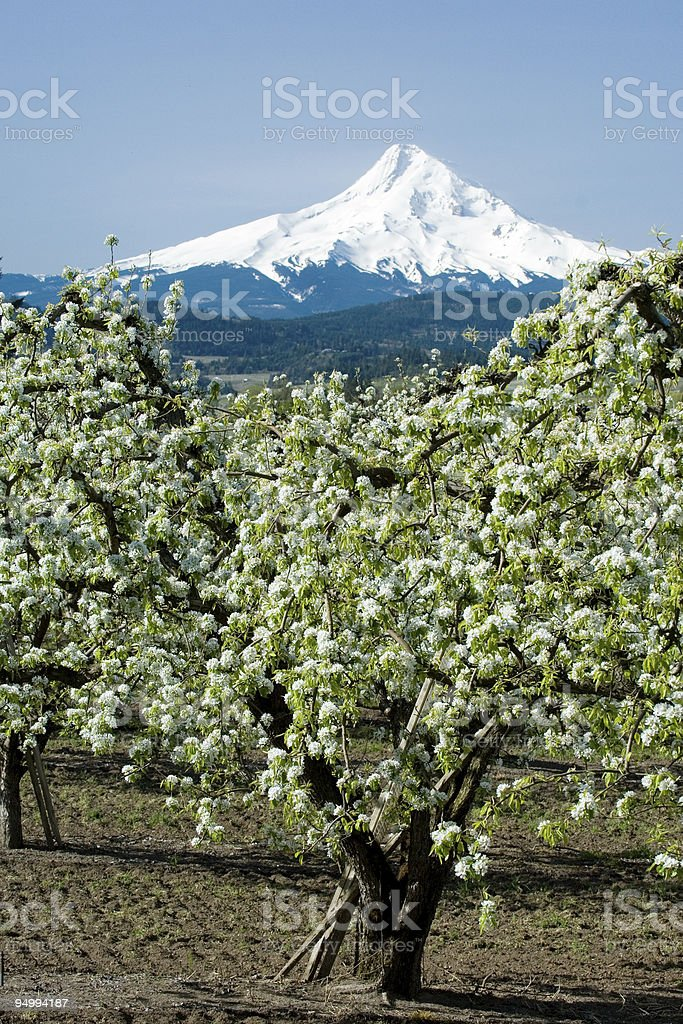 Hood Valley blooming royalty-free stock photo