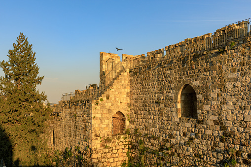 Hooded crow fly off from wall of old city Jerusalem at sunset