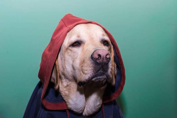 Hooded dog