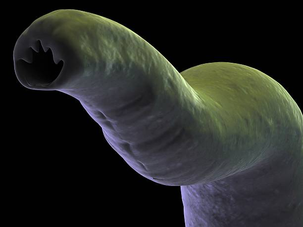 hookworm stock photo