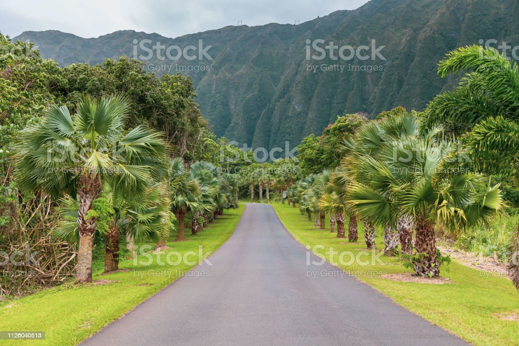 Hoomaluhia Botanical Garden Stock Photo Download Image Now Istock