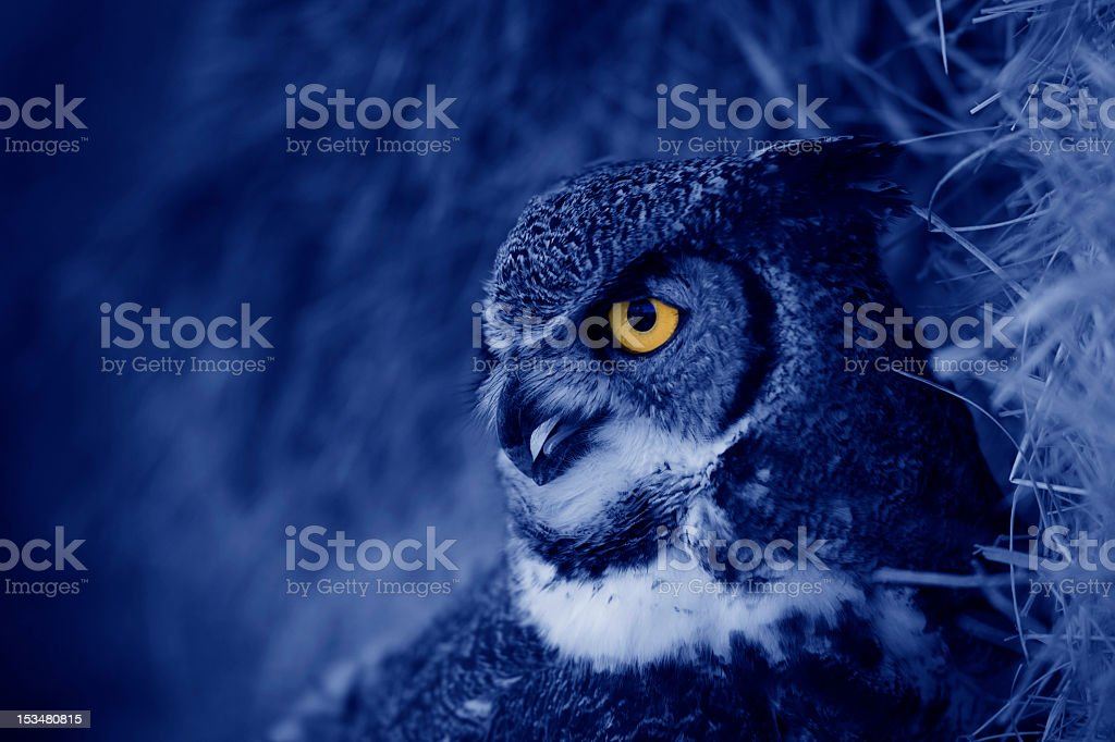 Hooting owl at night stock photo