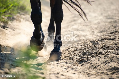 istock Hooves in dust 614212610