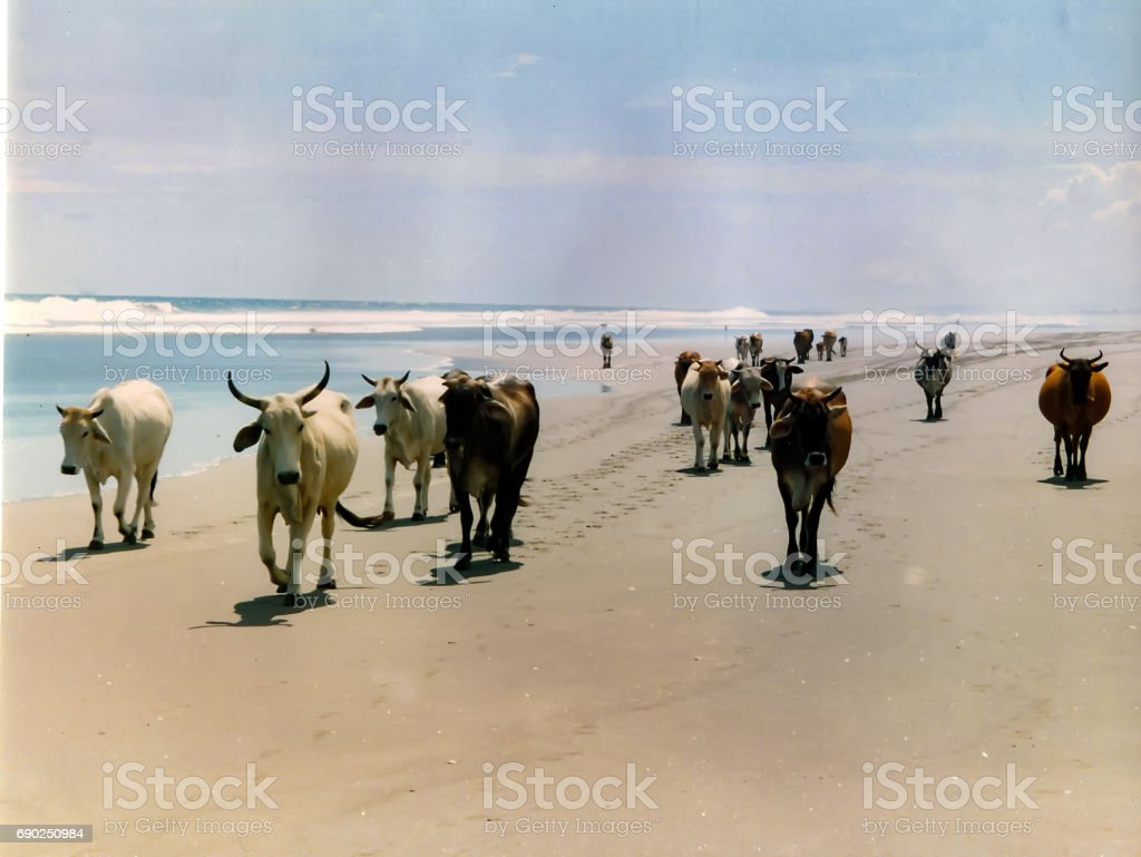 Hooves on the beach stock photo