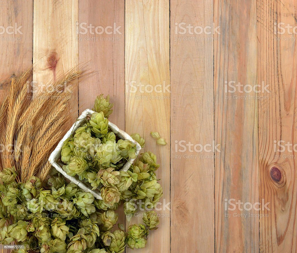Hop cones and ears of corn. stock photo