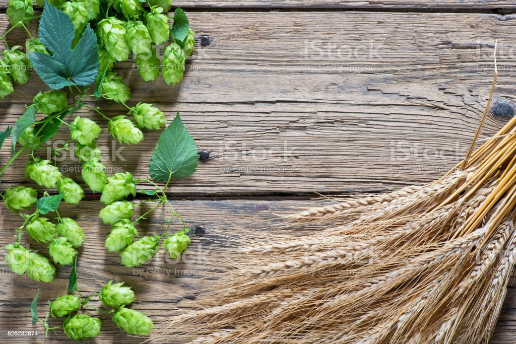 Hop cones on the old wooden floor stock photo