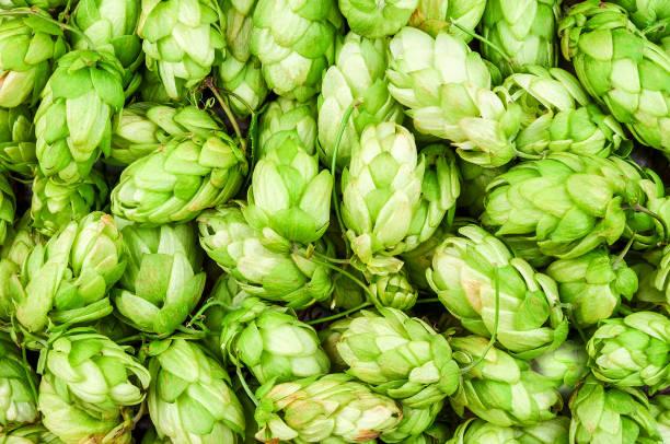 hop cones texture stock photo