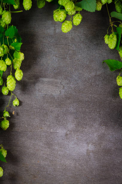 Hop twig over old cracked gray wooden table background. Vintage style. stock photo