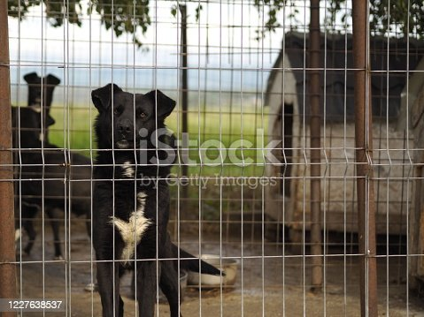 Hope for pet adoption. Sad dog in cage.
