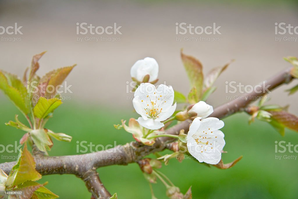 Hope for spring! royalty-free stock photo