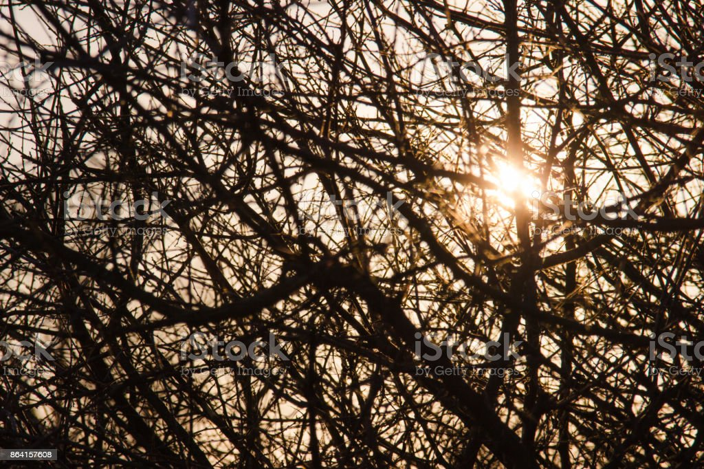 Hope - sun shines through branches royalty-free stock photo
