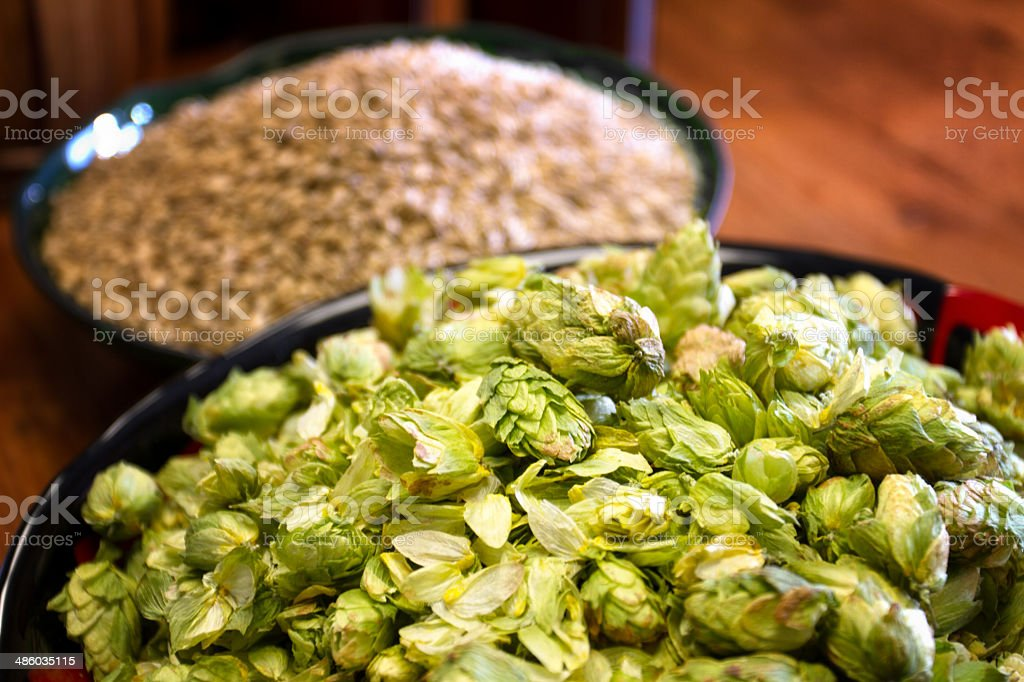 Hops and Barley stock photo