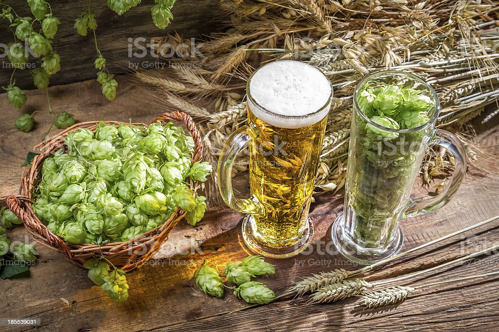 Hops and grains as ingredients for beer royalty-free stock photo