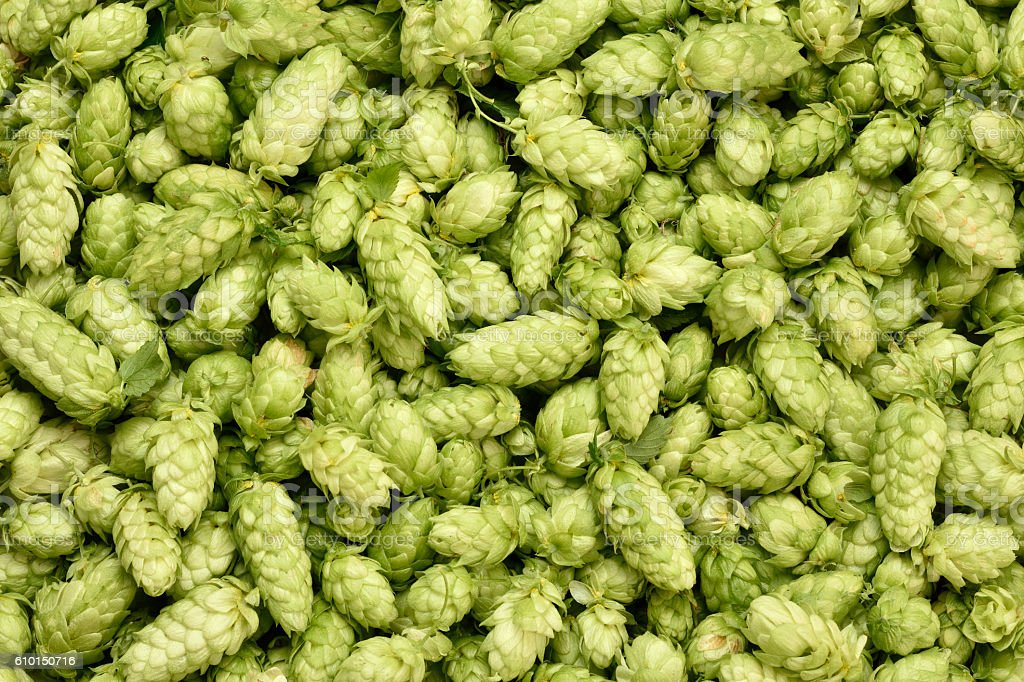 Hops background. stock photo