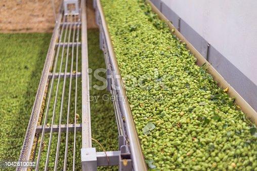 Drying hops in a hop kiln