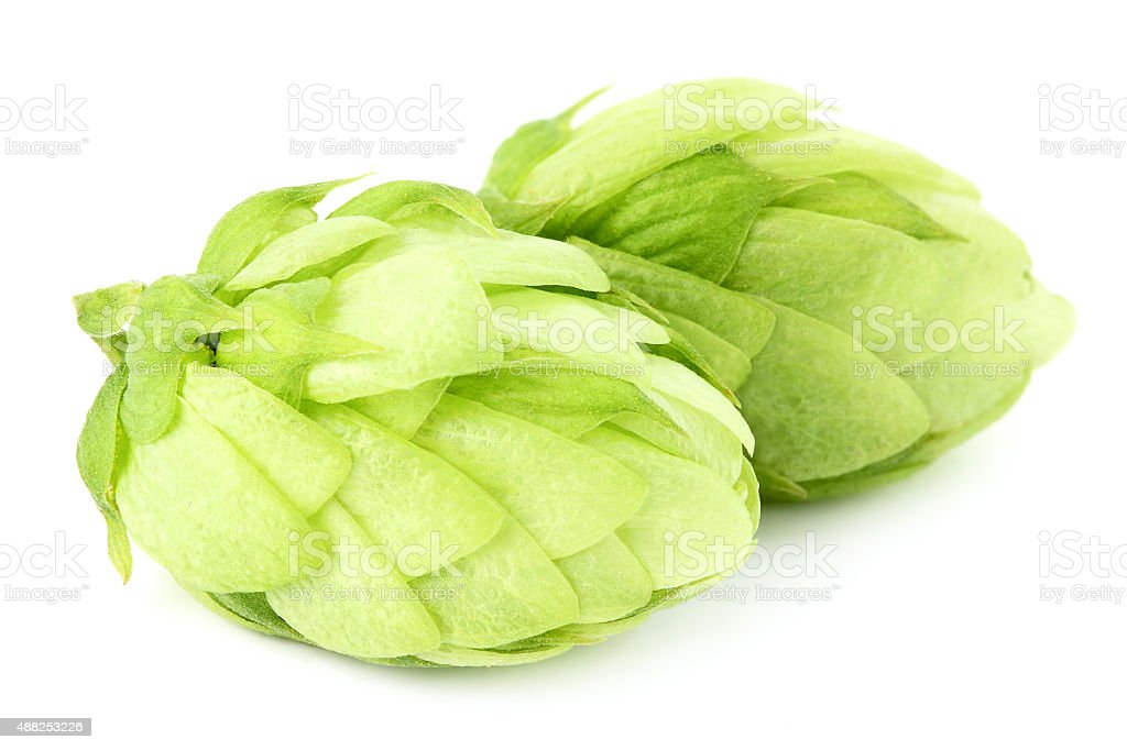 Hops on a white background. stock photo