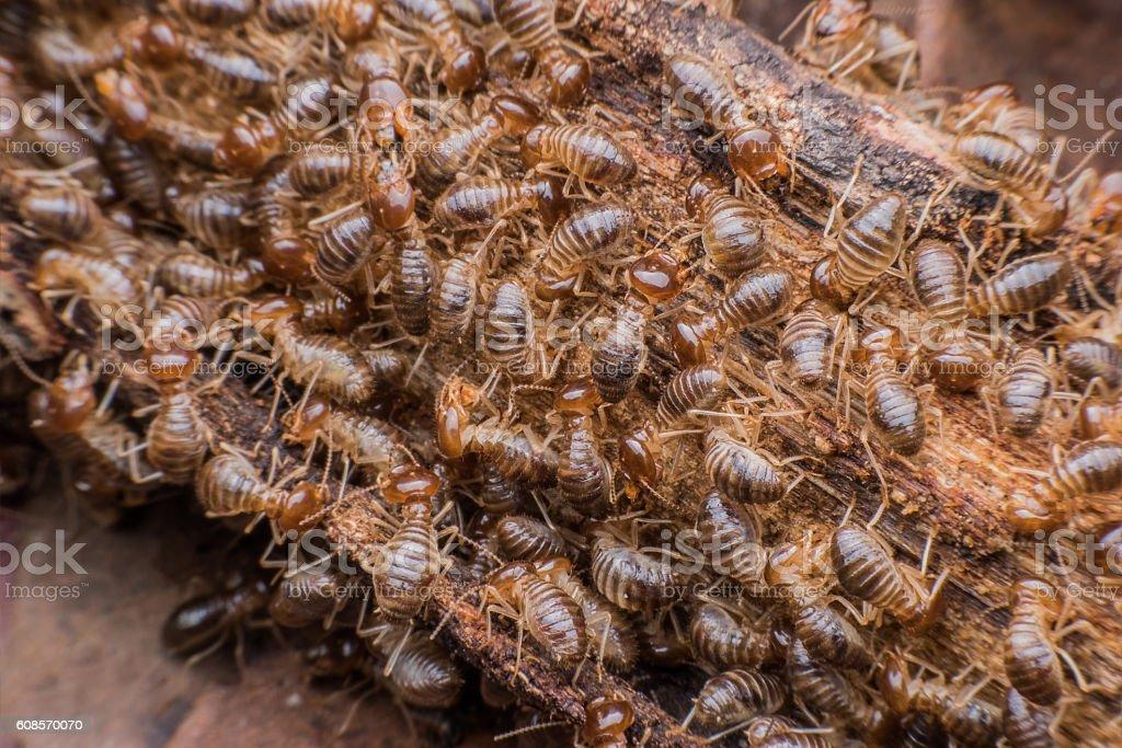 Hordes of termites stock photo