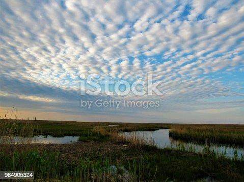 Marsh Land