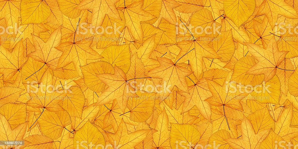 Horizontal Autumn Background royalty-free stock photo