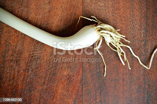 923629650istockphoto Horizontal click of one white garlic bulb with a gross bunch of roots over a dark brown wooden board surface 1096480130