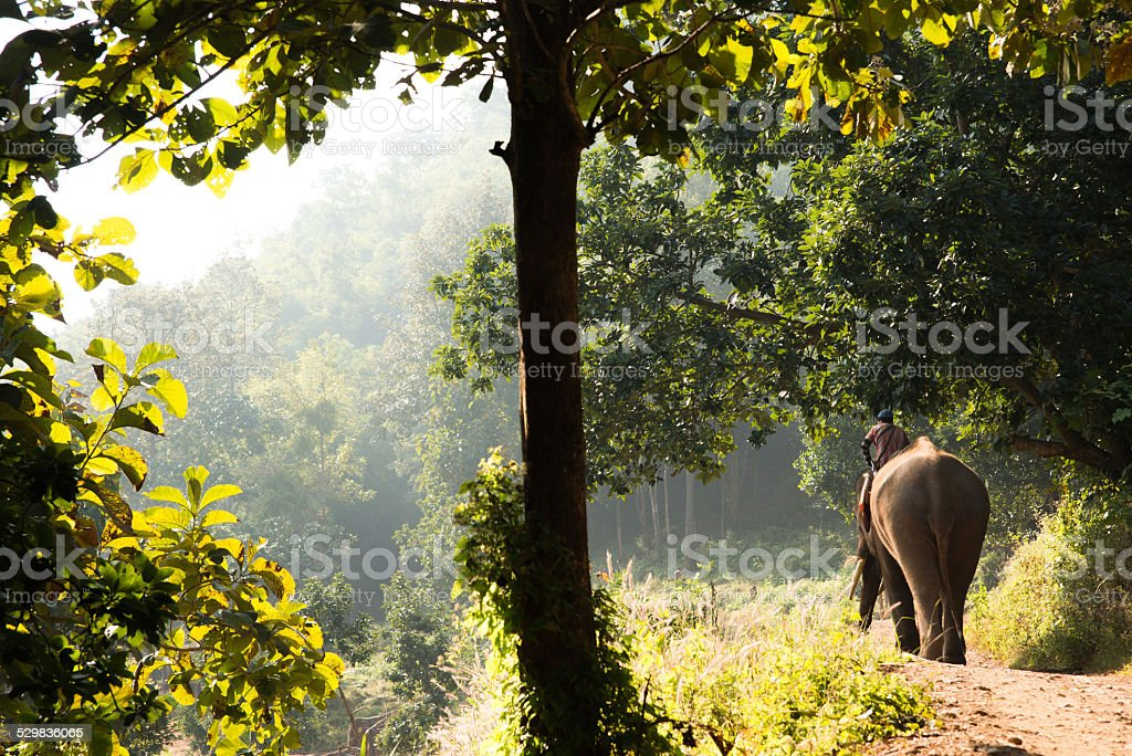 Horizontal Image of Mahout Riding Elephant in Thailand stock photo