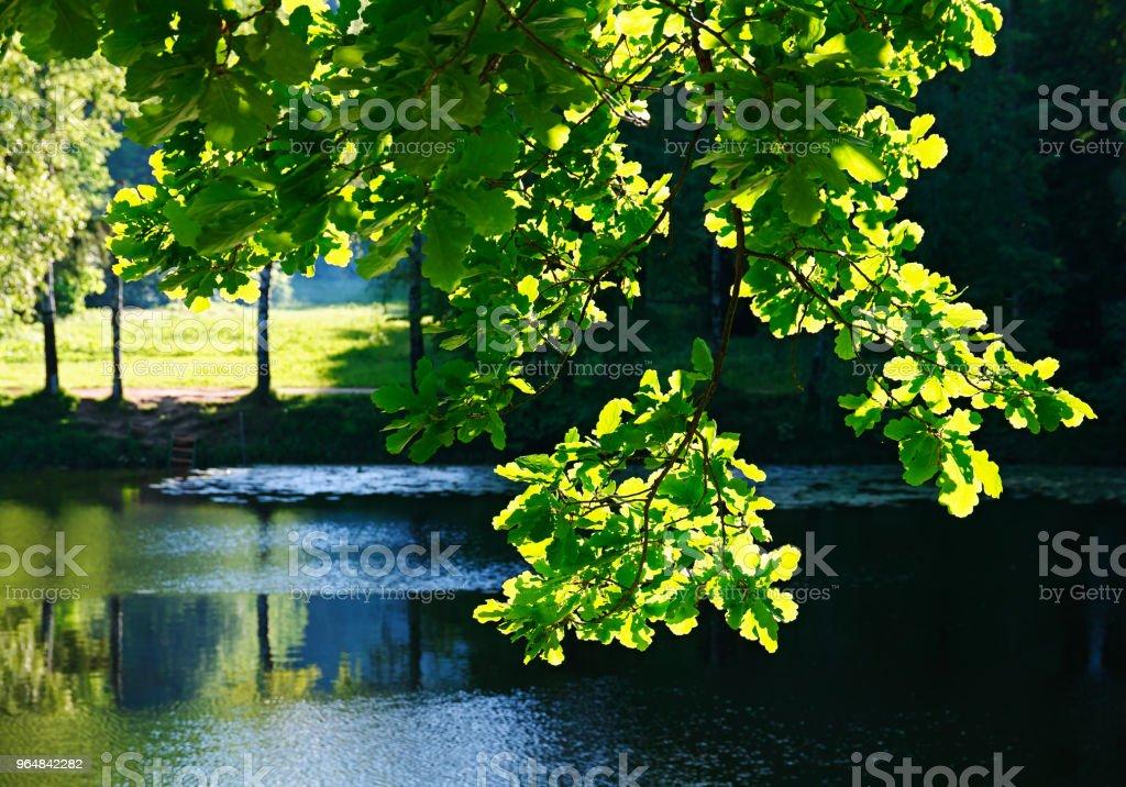 Horizontal landscape background royalty-free stock photo