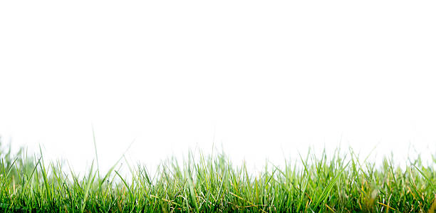 Horizontal photo of green grass and light blue sky stock photo