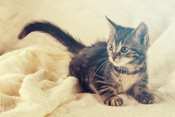 Horizontal photo of nice colorful striped few weeks old kitten cat picture id883102676?b=1&k=6&m=883102676&s=612x612&w=0&h=9pehx pij4e401eopeytocfekrtc7wuijwo1gkddilq=
