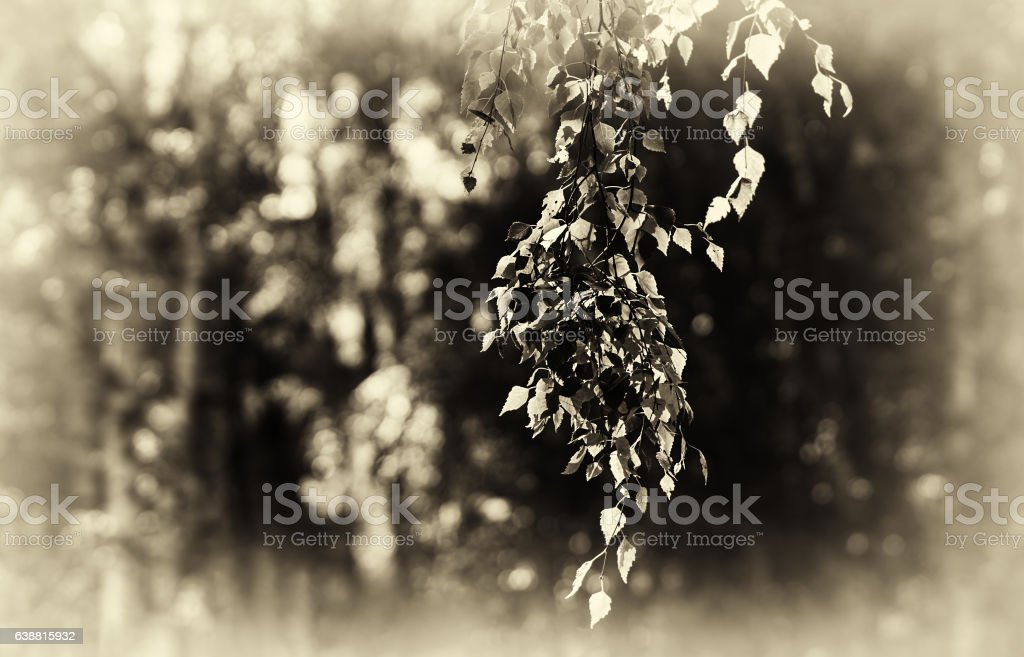 Horizontal right aligned sepia tree branch bokeh background stock photo