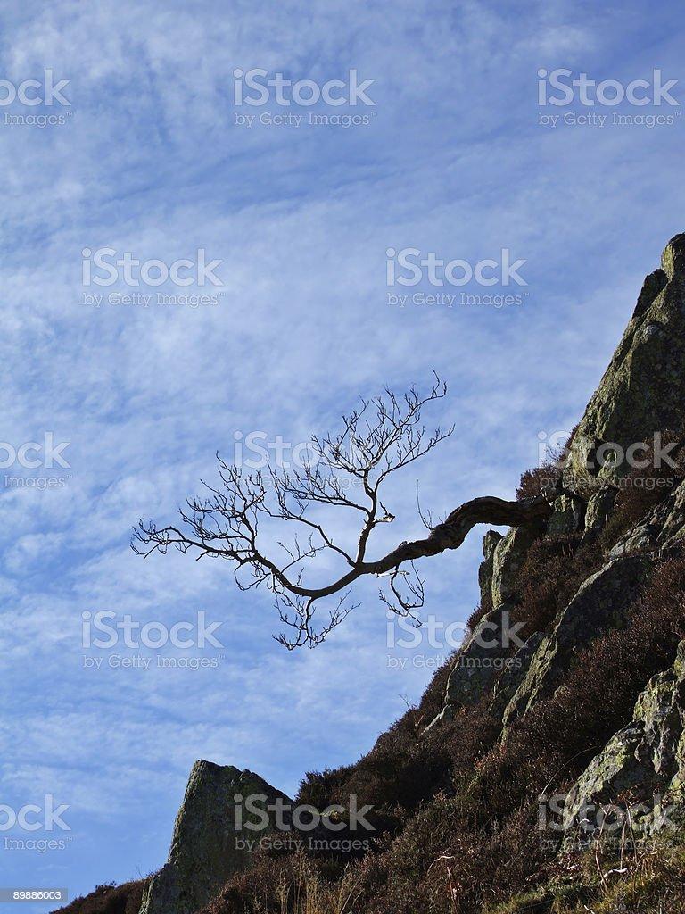 Горизонтальный дерево Стоковые фото Стоковая фотография