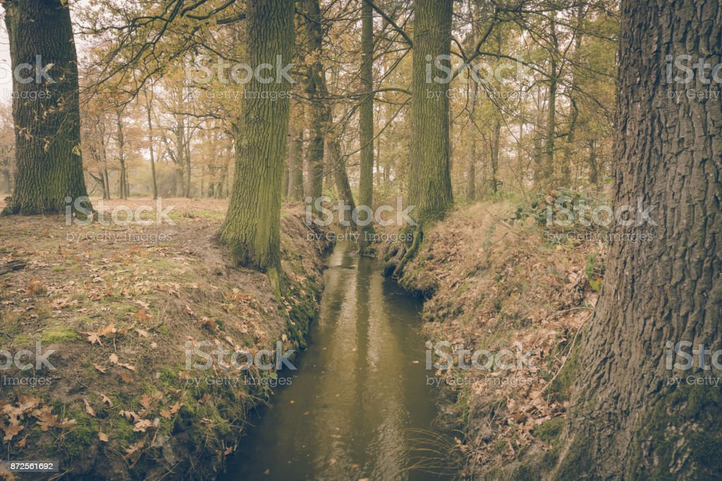 Horizontal vintage retro photo of small brook captured in cold autumn day with ground covered by brown leaves. Trees on both sides are covered by moss. Sky is covered by clouds. stock photo