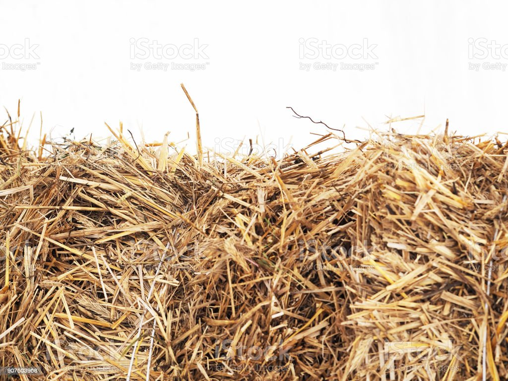 Horizontally bales of cereal straw on white background, agricultural background. Feed and litter for cows, horses, goats and sheep stock photo