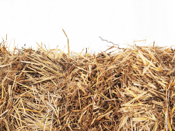 Horizontally bales of cereal straw on white background, agricultural background. Feed and litter for cows, horses, goats and sheep Horizontally bales of cereal straw on white background, agricultural background. Feed and litter for cows, horses, goats and sheep hay stock pictures, royalty-free photos & images