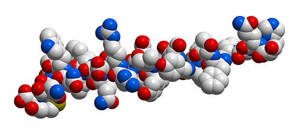 Hormone glucagon 3D molecular structure Hormone glucagon 3D molecular structure carbohydrate biological molecule stock pictures, royalty-free photos & images