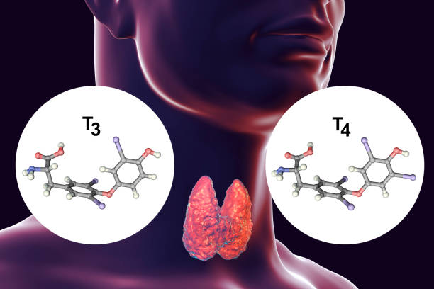 hormones of thyroid gland t3 and t4 - deficient stock pictures, royalty-free photos & images