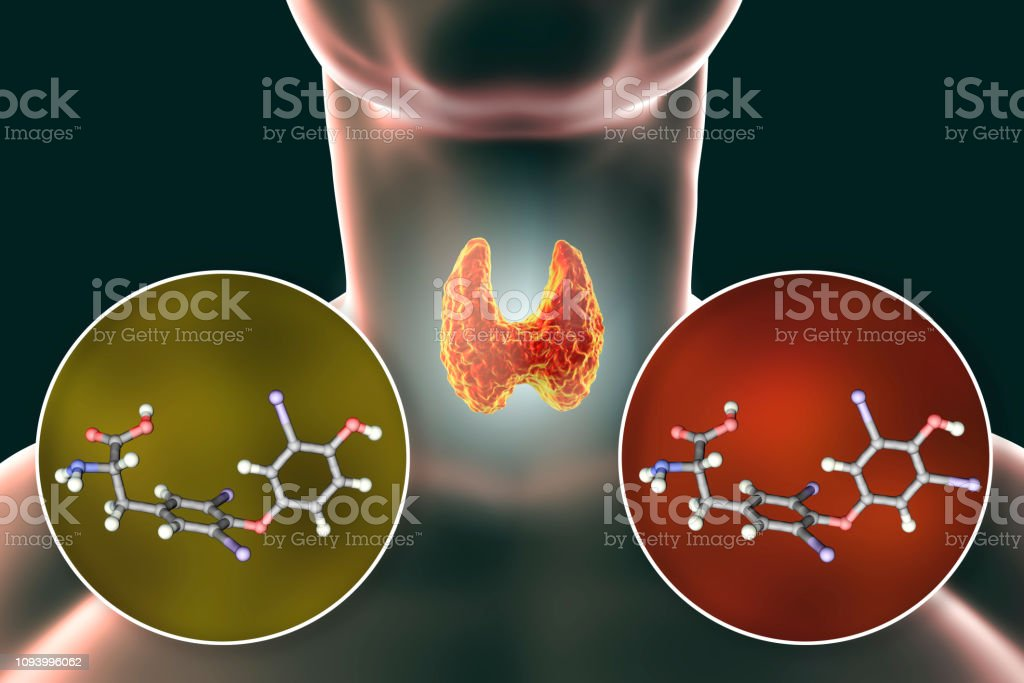 Hormones Of Thyroid Gland T3 And T4 Stock Photo Download Image