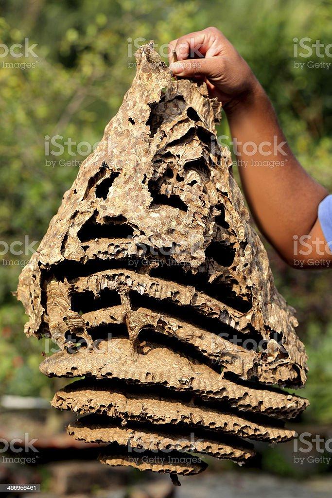 Hornet nest royalty-free stock photo