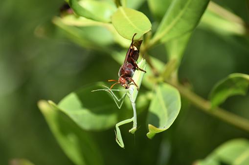 大黃蜂 照片檔及更多 中東 照片