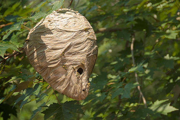 essay on nest in the wind