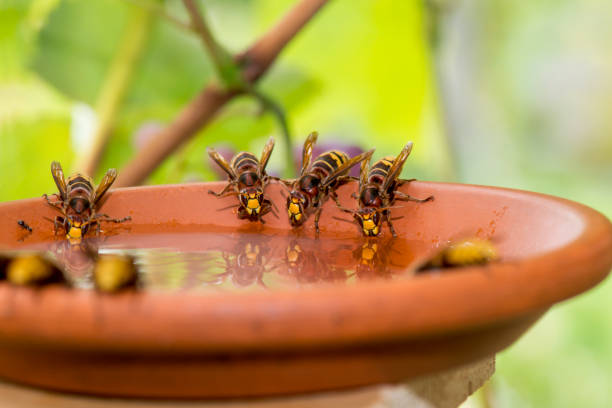 hornets – Foto