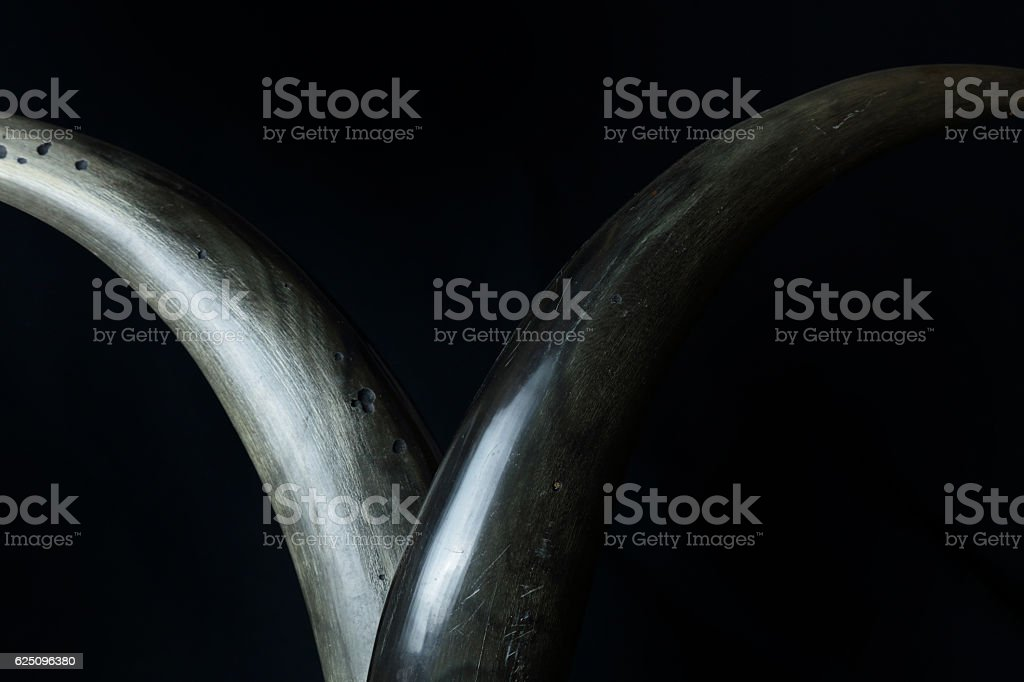 horns on black background stock photo