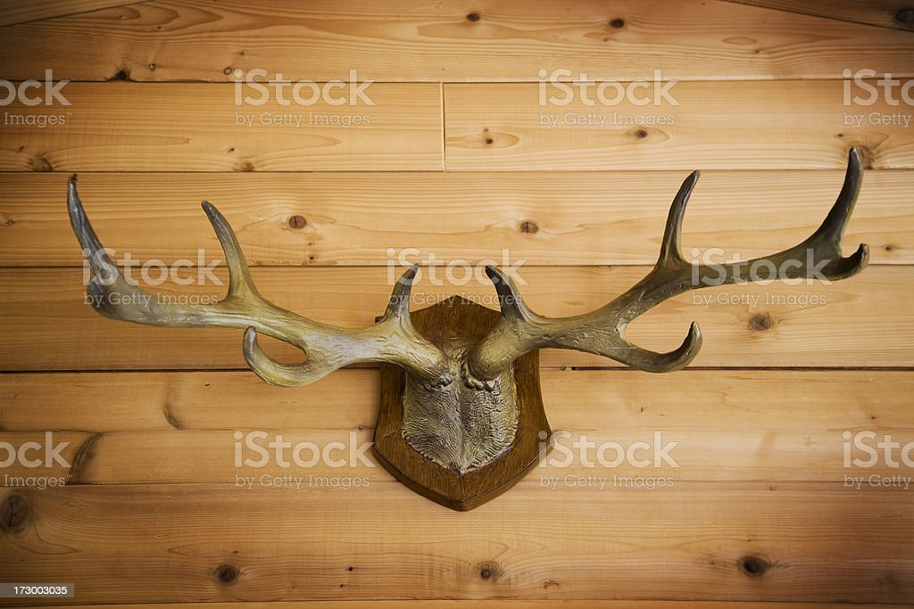 horns on wall royalty-free stock photo