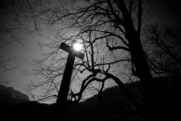 horror-wald - waldfriedhof stock-fotos und bilder