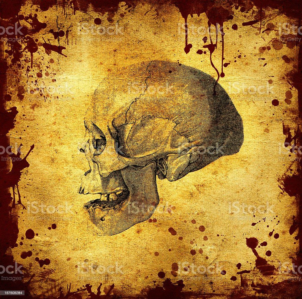 Horror Skull Halloween Background royalty-free stock photo