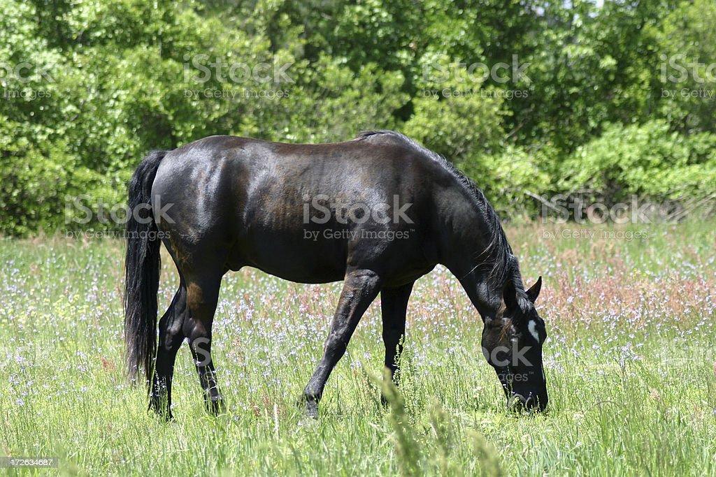Horse 1 royalty-free stock photo