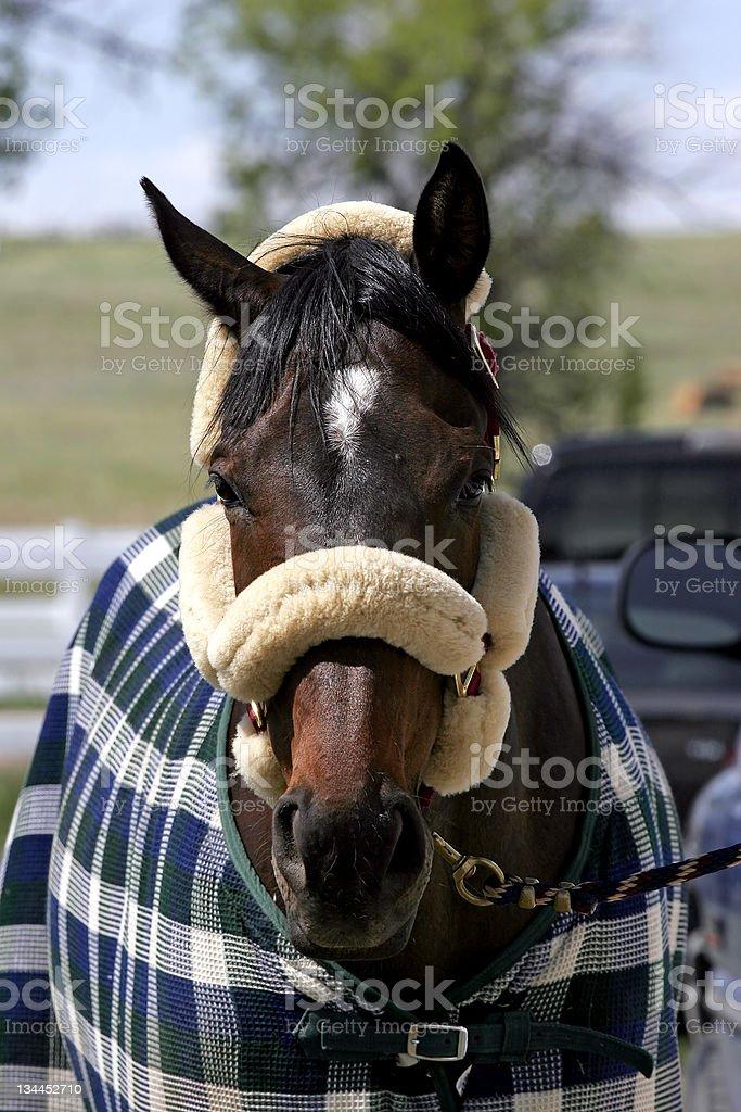 Horse Accessorized stock photo