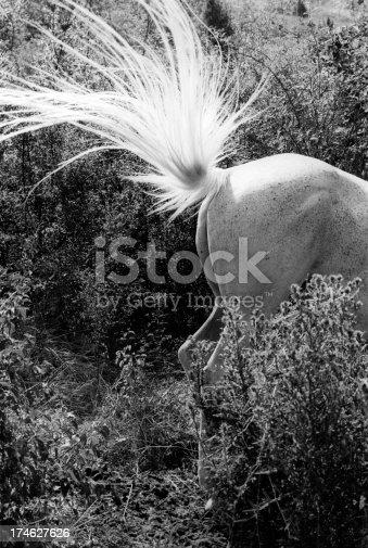 istock Horse air 174627626