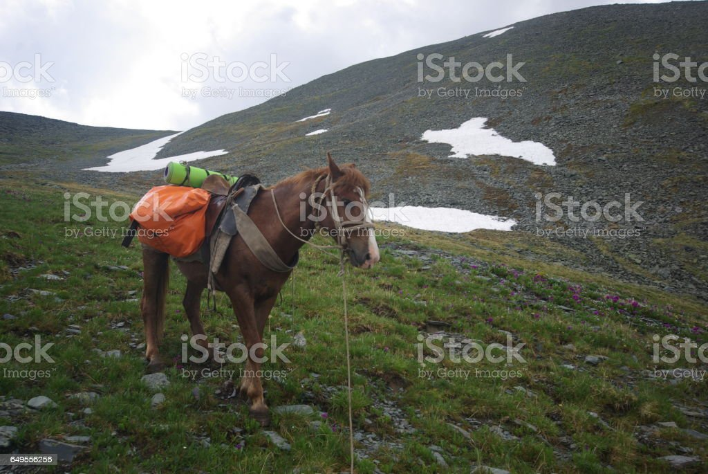 Horse among green grass in nature. Brown horse. Grazing horses in the village stock photo