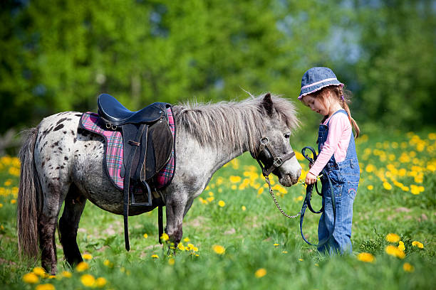 A horse and a child in a field Horse and child standing in a field in spring. pony stock pictures, royalty-free photos & images